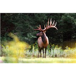 3 day hunt in Quebec for 2 hunters to each harvest a red stag, scoring up to 425 SCI
