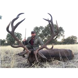 Two Iberian Red Deer for two hunters in Spain