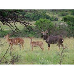 5 day hunt for kudu, eland, bushbuck, and nyala to be shared between 2 hunters