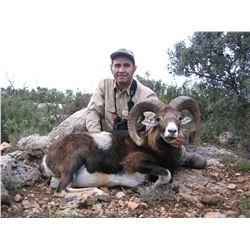 4 - DAY FREE RANGE IBERIAN MOUFLON SHEEP HUNT IN SPAIN FOR 1 HUNTER