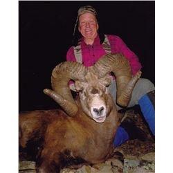 ALBERTA MINISTER'S SPECIAL BIGHORN SHEEP PERMIT THE ALBERTA FISH &