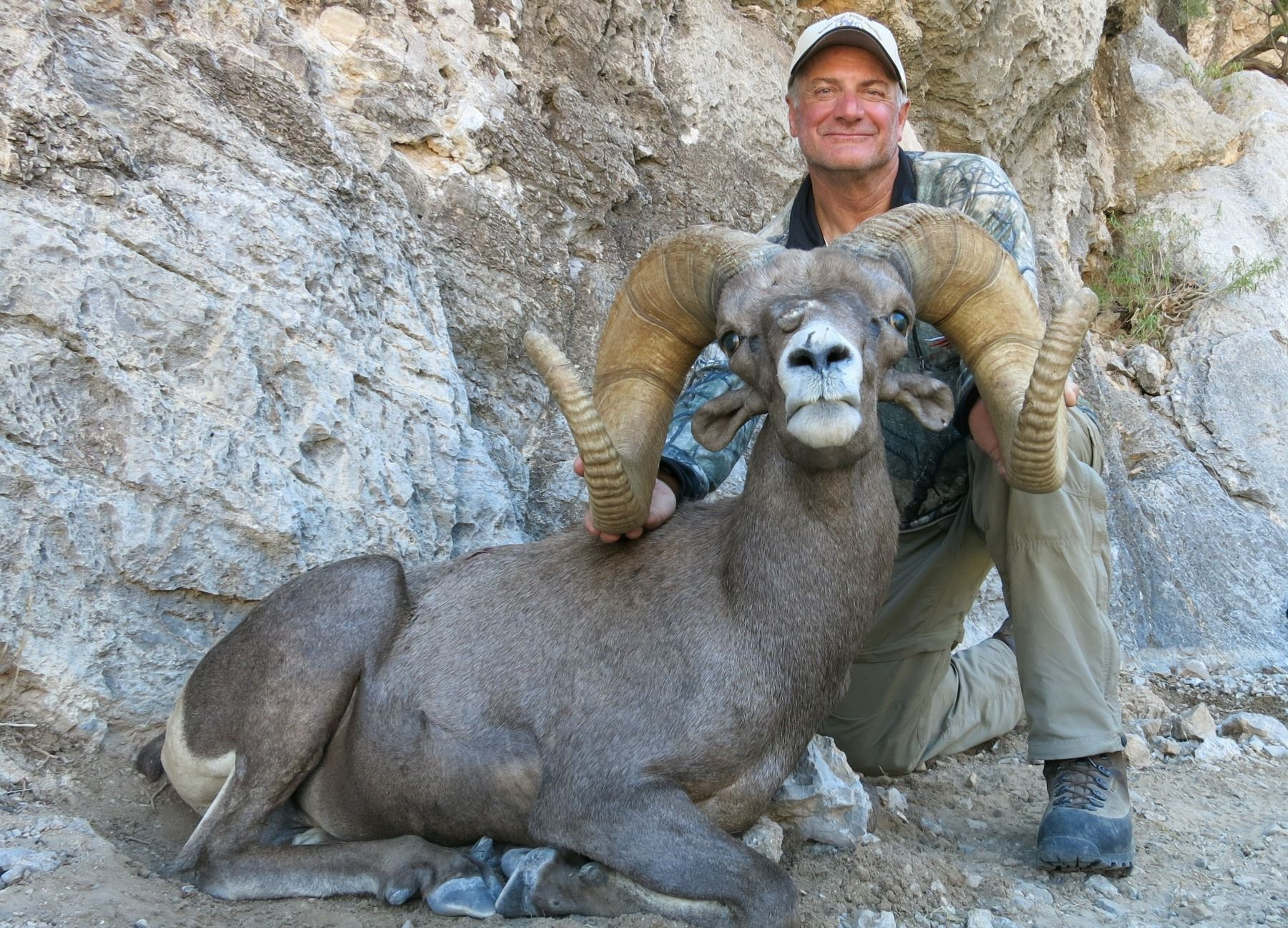 State Of Nevada Nelson Desert Bighorn Sheep Tag