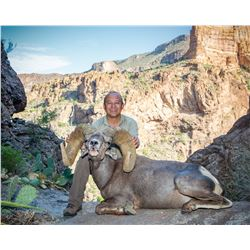 ARIZONA DESERT BIGHORN SHEEP PERMIT