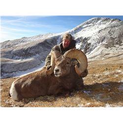 COLORADO ROCKY MOUNTAIN BIGHORN SHEEP LICENSE