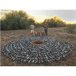Dove Hunt in Hermosillo, Mexico