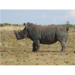 7-Day South Africa Darted Rhino Hunt