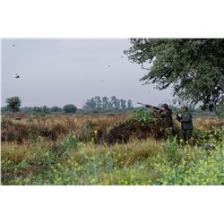 3 Day Argentina Dove Hunt for 2 Hunters