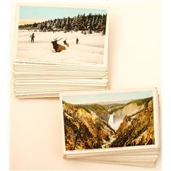 Large Lot of Yellowstone Postcards