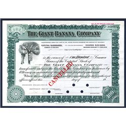 Giant Banana Co. ca.1900-1920 Specimen Stock Certificate.
