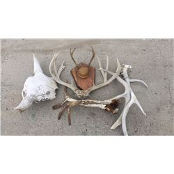 Lot of antlers and half buffalo skull