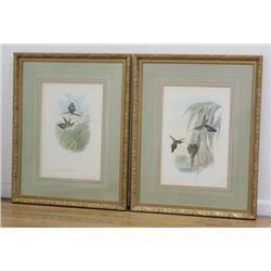 J. Gould & H.C. Richter Pair of  Hummingbirds