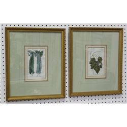 2 Antique Hand Colored Etchings of Plants