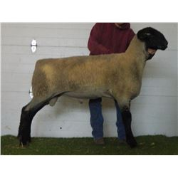 Nugget All-American Sheep Show and Sale - Session 1 - Page 1