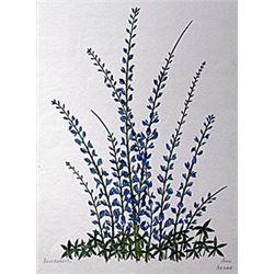 "Lithograph ""Blue Bonnets""  Moran"