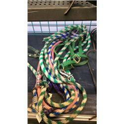 Bundle of lead ropes and harnesses