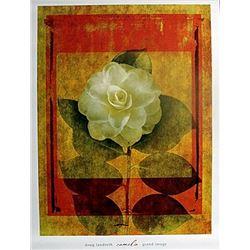 "Fine Art Print "" Camelia"" by Doug Landreith"