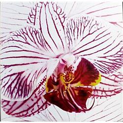 "Fine Art Print ""Orchid I"" by Mel Allen"