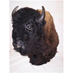 Mounted Buffalo Head