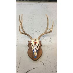4x3 European Mule Deer Mount Hand Painted