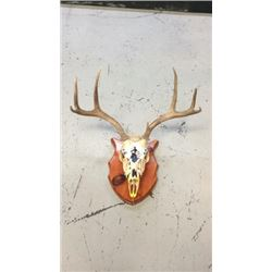 3x3 European Mule Deer Mount Hand Painted