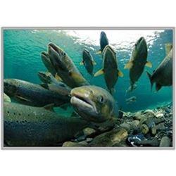 Salmon/Steelhead Fishing on the Klickitat River