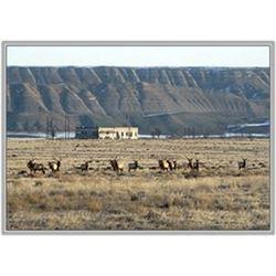 Hanford Elk Hunt