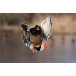 Duck Hunt on Barker Ranch