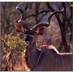 South African Plains Game Safari with Andre Stewart of Kuvhima Safaris