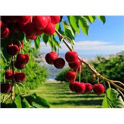 Gourmet Lunch & Tour of Monson Fruit