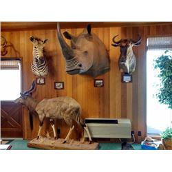 Trophy room restoration with the Klineburgers.