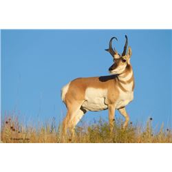3 Day Antelope Hunt for One Hunter
