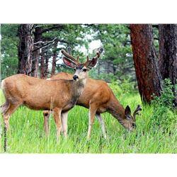 5 Day Muzzleloader or Archery Deer Hunt for One Hunter