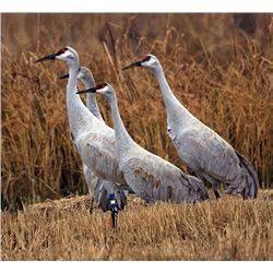 3 Day/3 Night Sandhill Crane Hunt for 2 Hunters