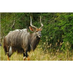 12 Day Hunt for two Nyla Bulls and Tiger Fishing Trip for 2 Hunters  (2 Travel Days, 8 Hunting Days,