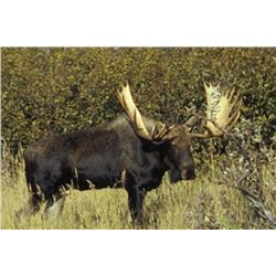 12 Day Yukon/Alaskan Moose Hunt for One