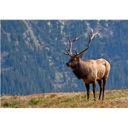 5 Day Rocky Mountain ELK Free Range Hunt for One Hunter