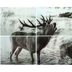 Laser Engraved Wildlife Art Work