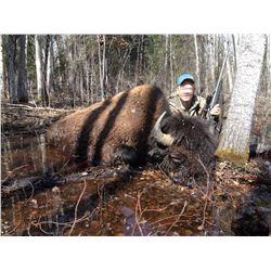 Blue Sky Outfitting – Alberta Free Range Bison Hunt