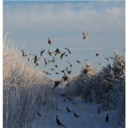 South Dakota - 2 Day and 2 Night Wild Pheasant Hunt for 2018 or 2019
