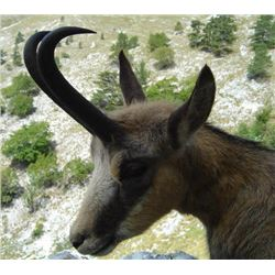 Slovenia – 4 days Hunting for Alpine Chamois with 2 Days of Touring