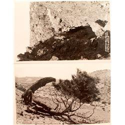 Two Frasher Real Photo Postcards of Mono Lake