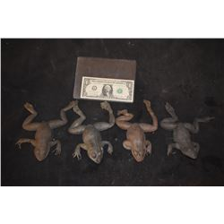 ZZ-CLEARANCE MAGNOLIA TREE FROG LOT OF 4 VERY LAST OF THE FROGS!