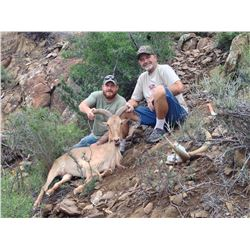 Texas Aoudad Ewe hunt with Huntaoudad Outfitters