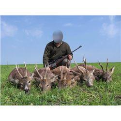 Serbia Roe deer hunt with European Hunting Adventures