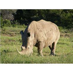 South African White Rhino Dart with TAM Safaris