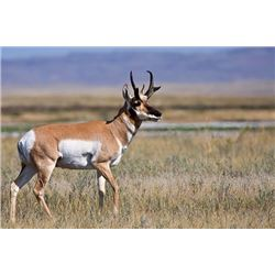 Wyoming Archery Antelope Hunt, Pronghorn Ranch LLC