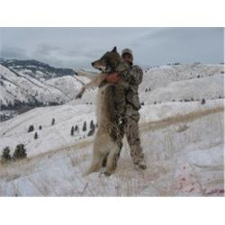 Guided 5-Day Wolf Hunt in Montana