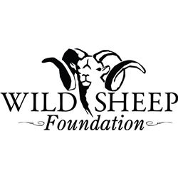 Life Membership to the Wild Sheep Foundation