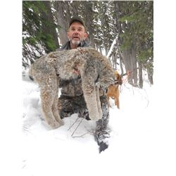 5 Day Lynx Hunt in Southern British Columbia