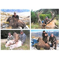 Red Stag Trophy Hunt in New Zealand